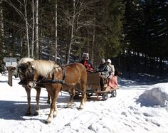 Horse drawn sled tour in Salzburg