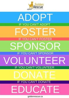 Rescue Dogs, Animal Rescue, Teen Volunteer, Volunteer Services, Charity Organizations, Website Template, The Fosters, How To Become, Adoption