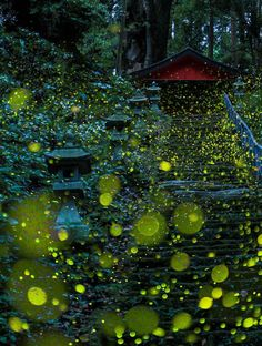Each Year Japan Is Home to This Magical Firefly Light Show