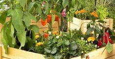 Balco / Jardinières de légumes