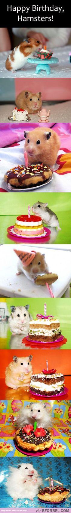 9 Hamsters Celebrating Their Birthdays…