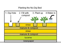No Dig Gardening // Deepgreenpermaculture.com // Great information here on no dig gardening, a fantastic way of keeping plants and soil super healthy without all of that back-breaking work. And, it works!! Love this!