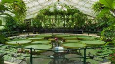 Image result for giant lily pads