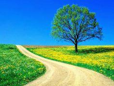 paisagens.jpg (640×480)