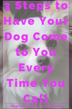3 Steps to Have Your Dog Come to You Every Time You Call - Dog Obedience Training Tips - Hunde Basic Dog Training, Training Your Puppy, Potty Training, Training Dogs, Training Schedule, Agility Training, Dog Agility, Training Online, Training Classes