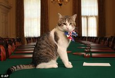 Larry, Chief Mouser to the Cabinet Office, 10 Downing Street, London, England