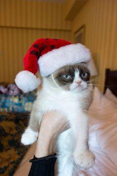 Christmas? I hate it!