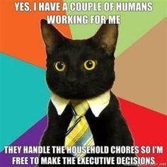 Business Cat Meme!