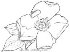 Sketches Of Flowers   This drawing of an old fashioned rose was much easier because it has ...