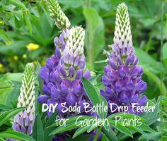 Soda+Bottle+Drip+Feeder+for+Garden+Plants