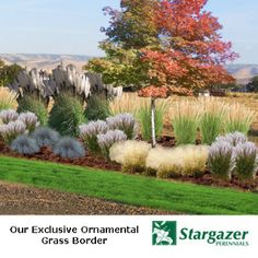 1000 images about ornamental grasses on pinterest for Small ornamental grasses for borders