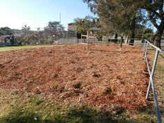 Posts about tree planting written by Saving Our Trees Modern Landscape Design, Modern Landscaping, Tree Planting, Trees To Plant, Country Roads, Chips, Wood, Garden, Nature