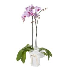 Wrapped Orchid