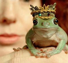 Looking for my prince but all I keep kissing are a bunch of frogs.