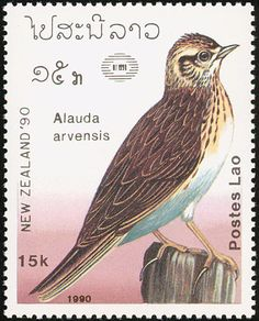 Eurasian Skylark stamps - mainly images - gallery format