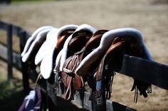 .. saddle up ..
