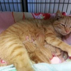 Shelter helping emaciated farm animals gets overrun with cats