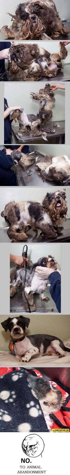 Ayuda a los animales ,no los hagas sufrir ...ten les cariño ...ayuda , no compres adopta ....
