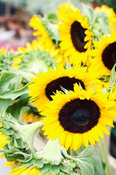 sunflowers ... another name for happy flower