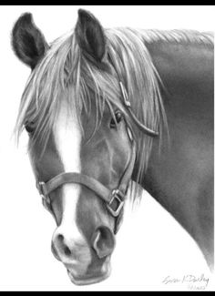 Horses are one the most beautiful and pure animals