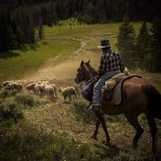 Photo by David Guttenfelder @dguttenfelder.  A Peruvian sheep herder on horseback working for a Montana rancher drives a flock of sheep in the Gravelly Mountains where they would graze for the season and trying to share the land with bears wolves and other wildlife migrating from Yellowstone National Park into adjacent forests. The Peruvian herder will spend the season living in the mountains among the sheep to protect them against attacks by wild animals.  2016 marks the 100-year…
