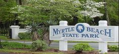Myrtle Beach state park, list of best things to do Myrtle Beach SC. Myrtle Beach State Park, Myrtle Beach Sc, Myrtle Beach Things To Do, Campsite, Cabins, State Parks, Acre, Apartments, Tent