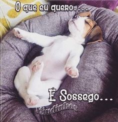 BOM DOMINGO A TODOS! ❤️❤️ #petmeupet  #cachorro  #amocachorro  #amoanimais  #amogato  #gato  #domingo