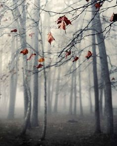 fall photography, nature photography, landscape, fog, mood, tree photography, trees, fall, winter, Autumn's End
