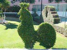 Cockerel topiary!