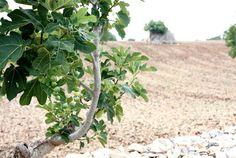Storia di una collana, di un albero e di una vocale