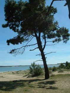 St Trojan, plage Gasteau Oleron island #france #vacances