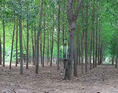 L'uomo invisibile si nasconde nel bosco...
