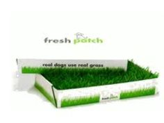 Real Grass Delivery for Dogs and Puppies | FRESH PATCH