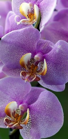 #Orchids | #Flowers | #flower                                                                                                                                                                                 More