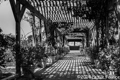 The Arbor Black and White by Lezlie Faunce Clark Gardens, Weatherford Texas, Pavilion, Landscape Photography, Sidewalk, Black And White, Park, Wall Art, Rose