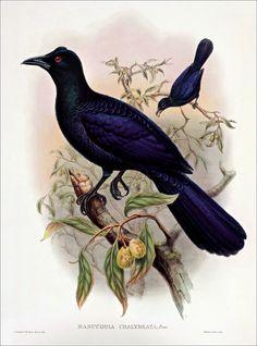 Birds of paradise 32