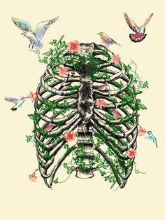 skeleton | Tumblr Anatomical <3