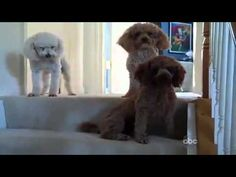 Best guilty dog video...too cute