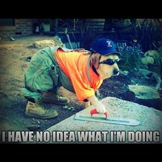 #dogmeme  #meme  #lol  #ihavenoideawhatimdoing  www.anilols.co.uk for more funny animals #cats