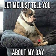 Are you looking for a cute and funny bulldog meme? These 20 cute bulldog memes will surely elicit aww's and make you want to adopt one. Bulldog Meme, Bulldog Quotes, Bulldog Breeds, British Bulldog, Old English Bulldog, French Bulldog Puppies, Funny Dog Memes, Funny Dogs, Funny Quotes
