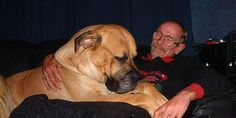 Boerboels are absolute lapdogs!