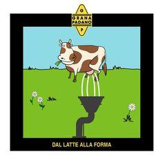Grana Padano Conoscete le varie tappe della filiera produttiva di Grana Padano? Il processo comincia con… Il latte di vacca trasferito in caldaie di rame per decremare in modo naturale.