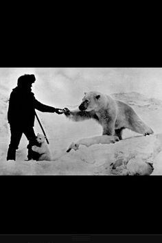 Russia, late 70s, man feeding a polar bear and his cubs with milk