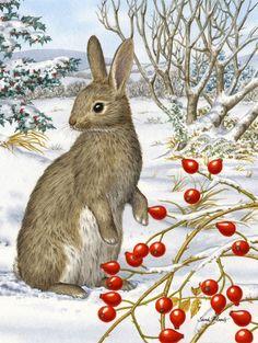 Sarah Adams   — Rabbit with Berries  (603x800)