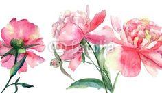 Quadro Beautiful Peonies flowers #stampasutela#stampasu#tela #regalaunquadro#venditaquadri #stampaquadrisu #plexiglassi #panello#bordato#panellobordato #quadri per#salotto Codice art:   44312356