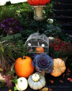 Fall is my absolute favorite time of year and while others may start packing up the garden tools and saying goodbye to landscaping projects as the first frost a…
