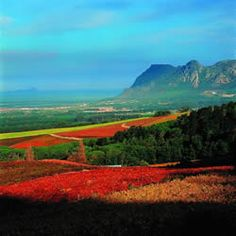 Magnificent Constantia Valley in Cape Town offers great wines, fantastic scenery and good food. Namibia, Cape Town South Africa, Places Of Interest, Countries Of The World, 6 Years, Beautiful Places, Amazing Places, Rest Of The World, Monument Valley