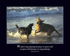 Motivational posters and prints for dog owners and dog lovers. Dog Quotes, Animal Quotes, I Love Dogs, Cute Dogs, Some Jokes, Dog Poster, Like Animals, The More You Know, You Gave Up