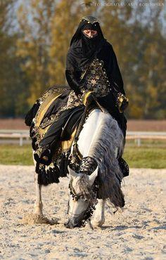 Elsar. Arabian horse