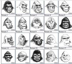 The faces of Sasquatch.